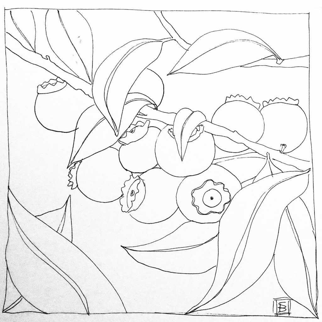 line drawing of blueberries