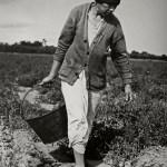 Dorothea Lange, Grand-mère mexicaine employée à ramasser des tomates en Californie, 1938