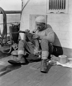 George Levick examinant une peau de manchot sur le pont du Terra Nova. Photo: Herbert Ponting, décembre 1910
