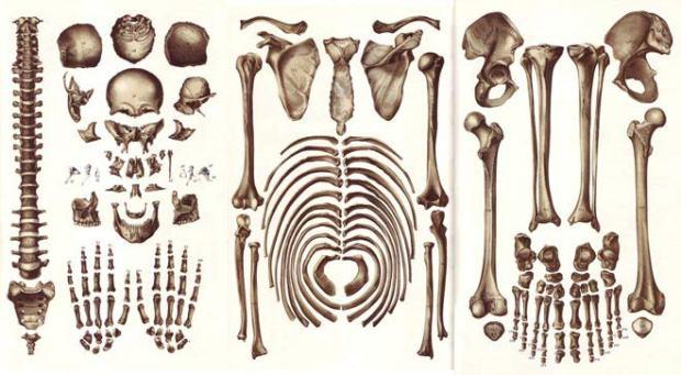 Farinelli en pièces détachées, suite à une exhumation récente. Certains prétendent, à l'examen du bassin, qu'il était en réalité une femme atteinte de gigantisme. On ne peut plus se fier à rien.