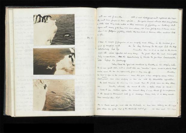 Manuscrit de Levick sur les comportements sexuels des manchots Adélie. Oublié pendant une centaine d'année, retrouvé en 2012, puis devenu possession du Musée d'Histoire Naturelle de Londres en 2020. On aperçoit quelques notes prises avec le code en alphabet grec.