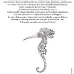 Coloriage - L'hippocampe resplendissant ©Philippe Mignon