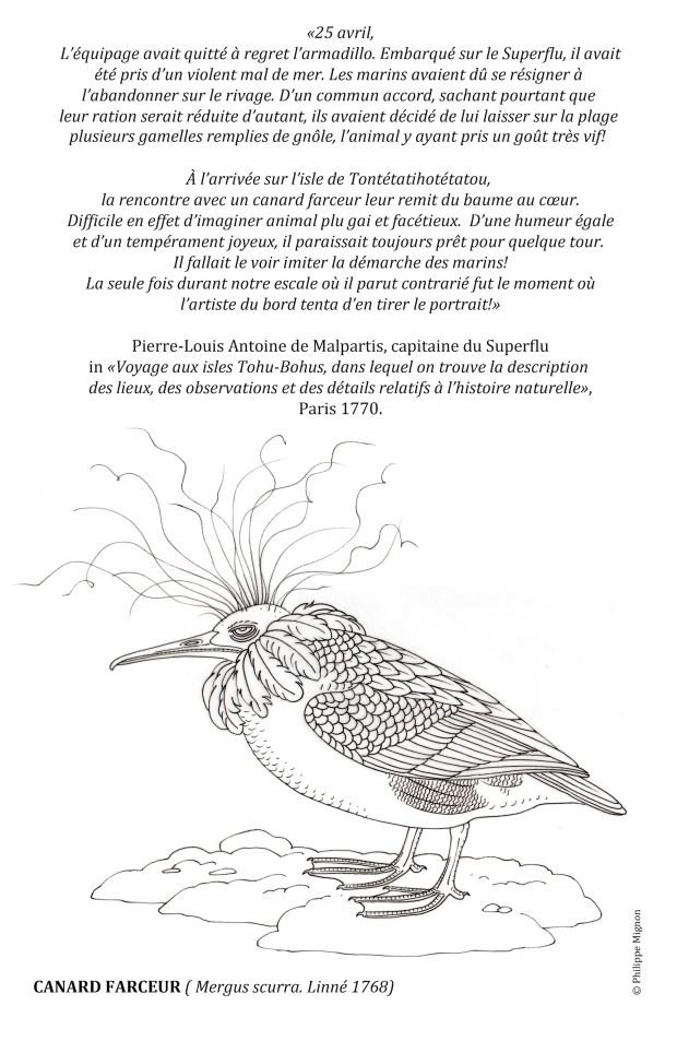 Coloriage - Le canard farceur ©Philippe Mignon