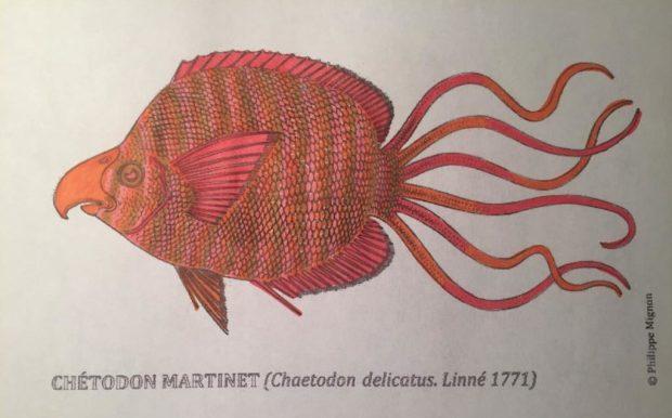Le chétodon martinet colorié par Carmina sur un dessin original de Philippe Mignon