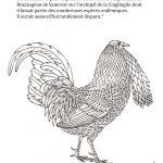 Coloriage : le coq chauve © Philippe Mignon