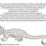 Coloriage - Le diabolin © Philippe Mignon