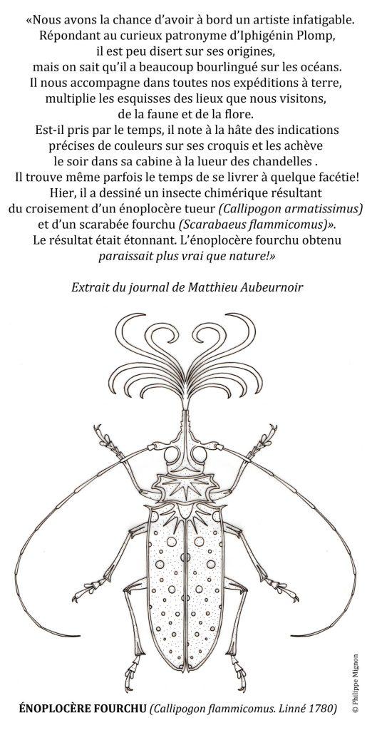Coloriage - L'énoplocère fourchu ©Philippe Mignon