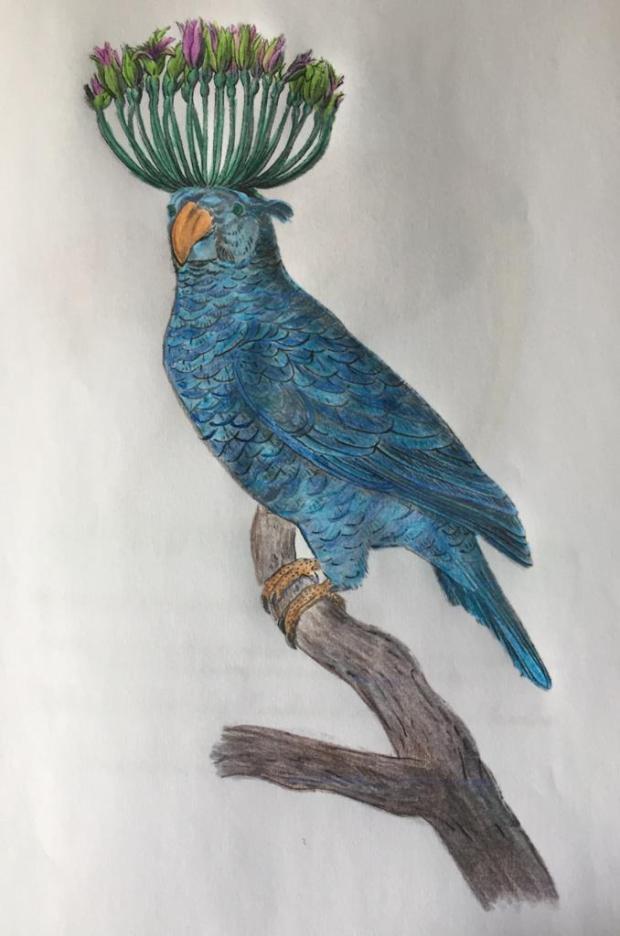 Tatou colorié par Carmina sur un dessin original de Philippe Mignon