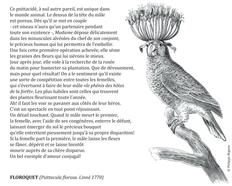 Coloriage - Le floroquet © Philippe Mignon
