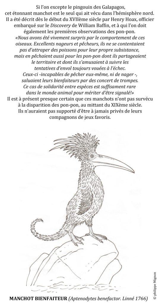 Coloriage - Le manchot bienfaiteur © Philippe Mignon