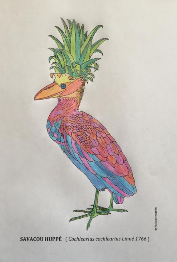 Le Savacou huppé. Coloriage de Carmina. Dessin original © Philippe Mignon
