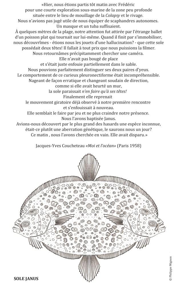 COLORIAGE - La sole Janus ©Philippe Mignon