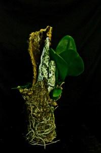 Tisser les racines, détail © Ana Maria Lozano