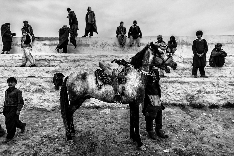 cheval afghanistan Majid Saeedi photoreporter Saint-Brieuc