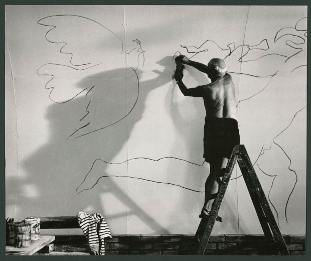 Picasso dessinant les Colombes