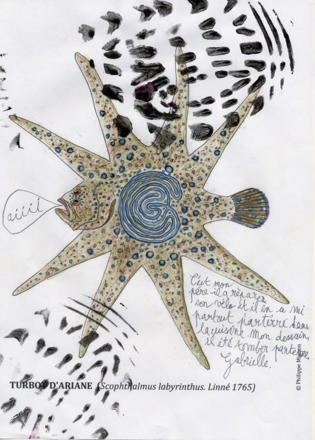 Turbot étoilé colorié par Gabrielle sur un dessin original de Philippe Mignon