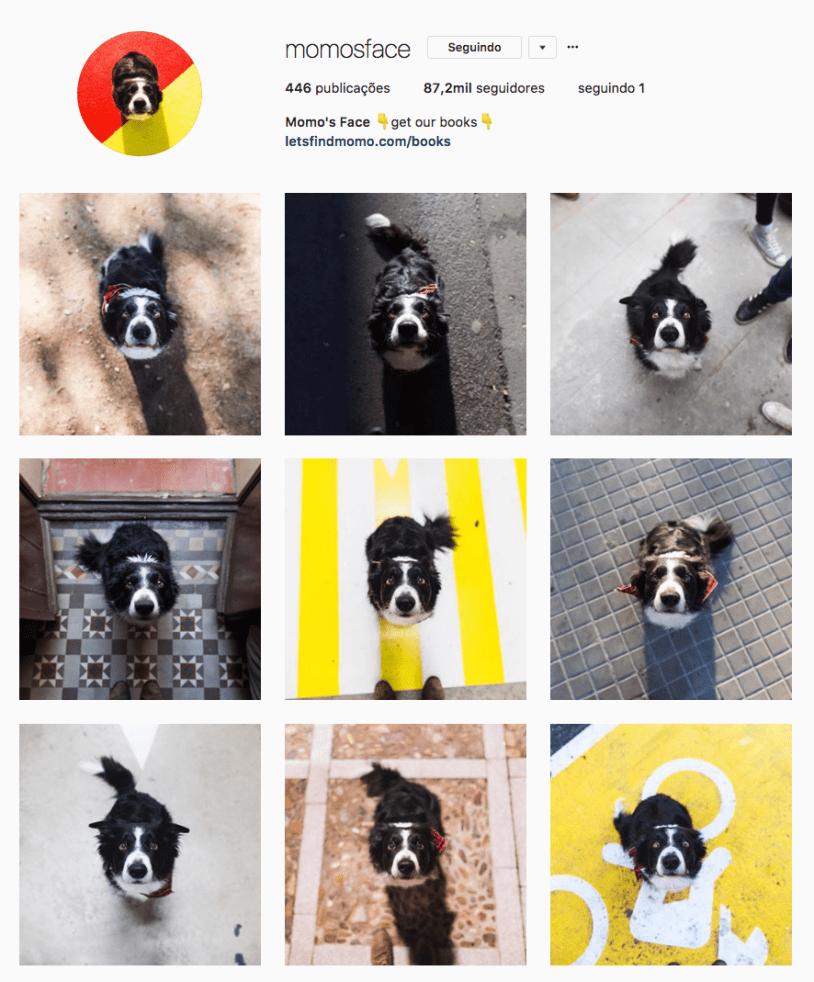 Cachorros para seguir no Instagram: Momo. Por Delicia de Blog.