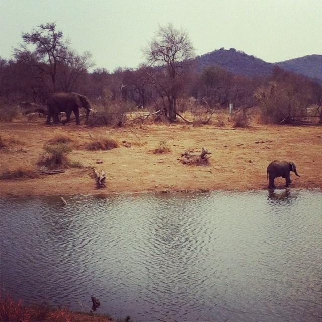 Instagramadas da África