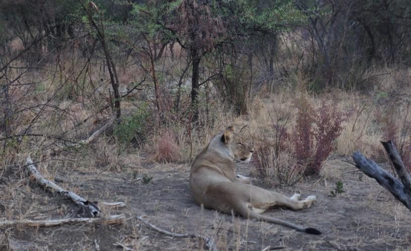 Animais selvagens podem ser vistos nos safaris do Jacis Lodge, hotel na Africa do Sul