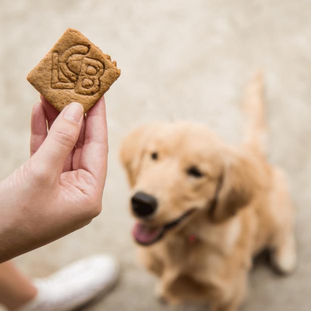 Luz, Câmera, Burguer! – a hamburgueria pet friendly