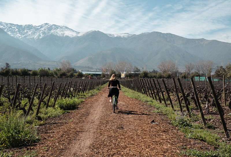 Passeio de bike pela cousino macul, vinicola em Santiago
