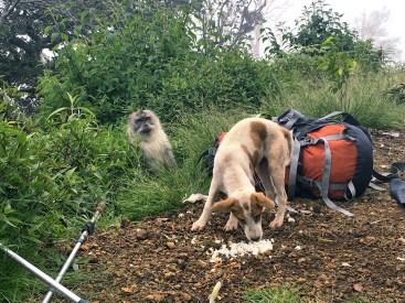 Dogs Rinjani Trek day2 - Delicieuse Vie
