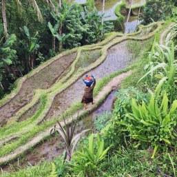 Tegalalang Rice Terrace Ubud Bali by Délicieuse Vie