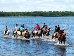 We sometimes see a group of local children takeing their horses into the shallow beach behind our suumer house.