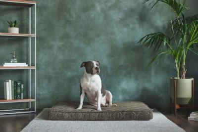 Griffith Pet Bed (4 Sizes / 3 Colors)
