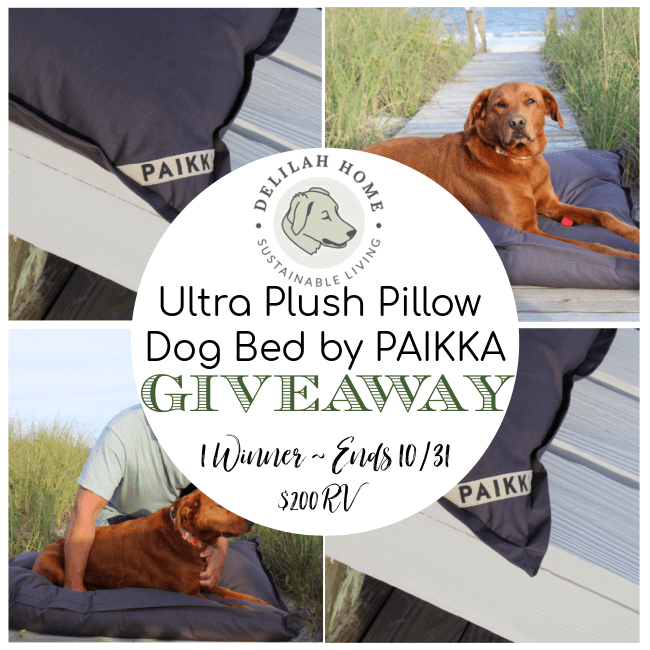Delilah Home Ultra Plush Pillow Dog Bed by PAIKKA