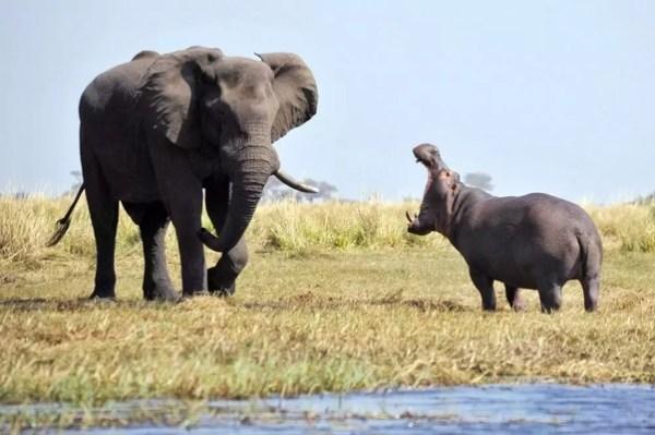 Почему слон не динозавр Деликатесы для Размышлений
