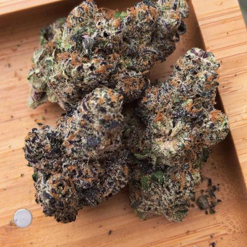 Buy Biscotti Strain Genetics online Buy Biscotti Strain Genetics Online. This strain was created by Cookies Fam. They claim to be the pioneers of a lot of these exceptionally dank strains, and it's hard to disagree with them. Biscotti is a cross between: Gelato #25 Girl Scout Cookies Gorilla Glue #4 Although it's hard to say if this is completely correct, as some people say it's Gelato x South Florida OG, it's definitely one of these combinations. Gelato is in itself a dankenstein strain, and Gorilla Glue #4 and Girl Scout Cookies are two of the best known dank strains in the world. Biscotti is an ultimate strain with probably one of the best taste profiles in the business. This is the real kicker. Unfortunately, as the seeds aren't available online, and in general the strain is exceptionally rare, the price is very high. In Amsterdam, you're probably looking at about $40 a gram at least. In North America, it's going to be slightly cheaper, but still not cheap by any means. A gram will cost at least $25 in a dispensary in California. However, because of its strength, it's probably worth it. BISCOTTI WEED STRAIN TASTE Fruity Nutty Spicy Sugary Sweet Biscotti is definitely a strain you're going to want to experience inside a flower vaporiser. Although it's also one of those strains that tastes good no matter how you smoke it, it's definitely worth cracking out your trusty flower vape for this one. It's simply one of the best-tasting strains available on the market right now, and to combust it ruins the flavour ever so slightly. By using a vaporiser there is no combustion, keeping Biscotti's elegant flavor profile in tact. Furthermore, if you grind the weed first, it will taste even better inside your vaporiser. WAX, SHATTER, EDIBLES ETC. Any strain can be made into wax or oil. It's not an easy process, but you can technically make Butane Hash Oil from any strain at home. It's considered to be dangerous, so please exercise extreme caution when attempting it. If you do 