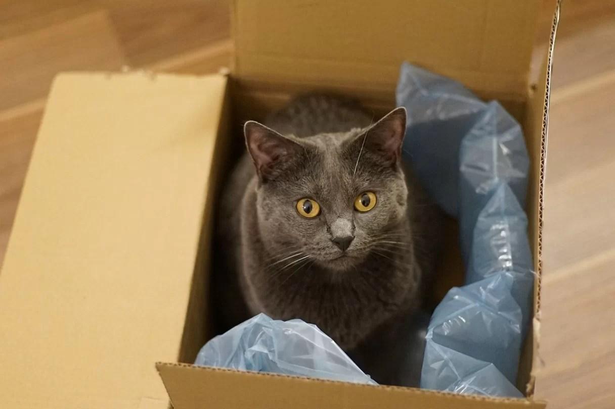 best travel litter box for cats