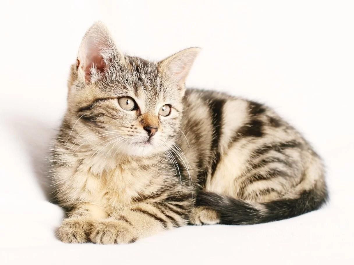 Best Cat Sedatives for travel