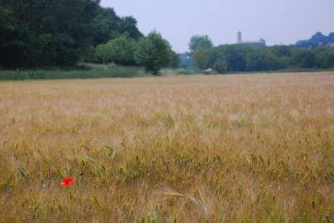 Peschiera - Borghetto sul mincio - Weat field