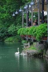Garda lake in 1 day - Borghetto Sul Mincio