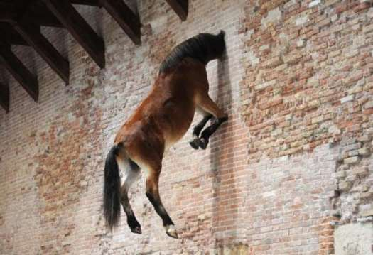 Cavallo Cattelan