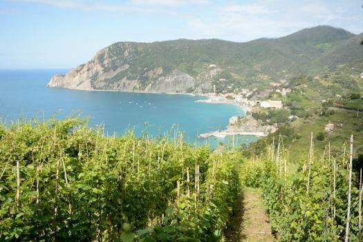 Monterosso-Vernazza trail-3_Cinqueterre_Delightfullyitaly.com