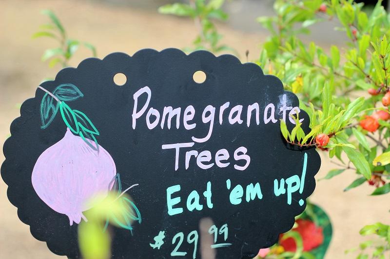 Pomegranate-trees