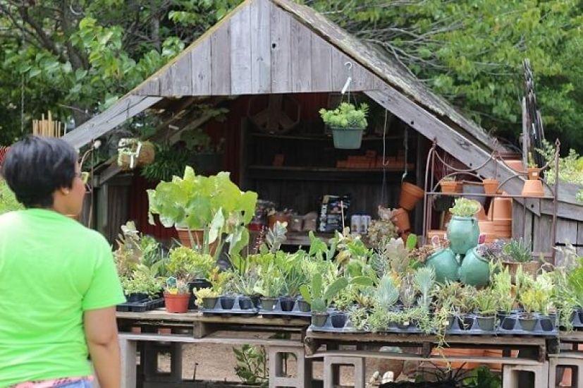 garden-succulents
