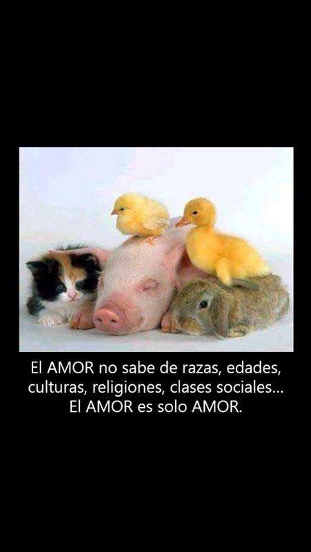 sólo amor