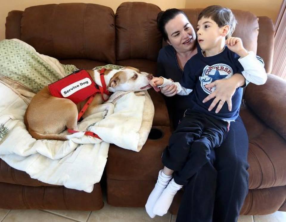 pitbull-perro-terapia-2