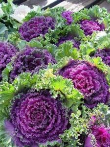 flores de coliflor