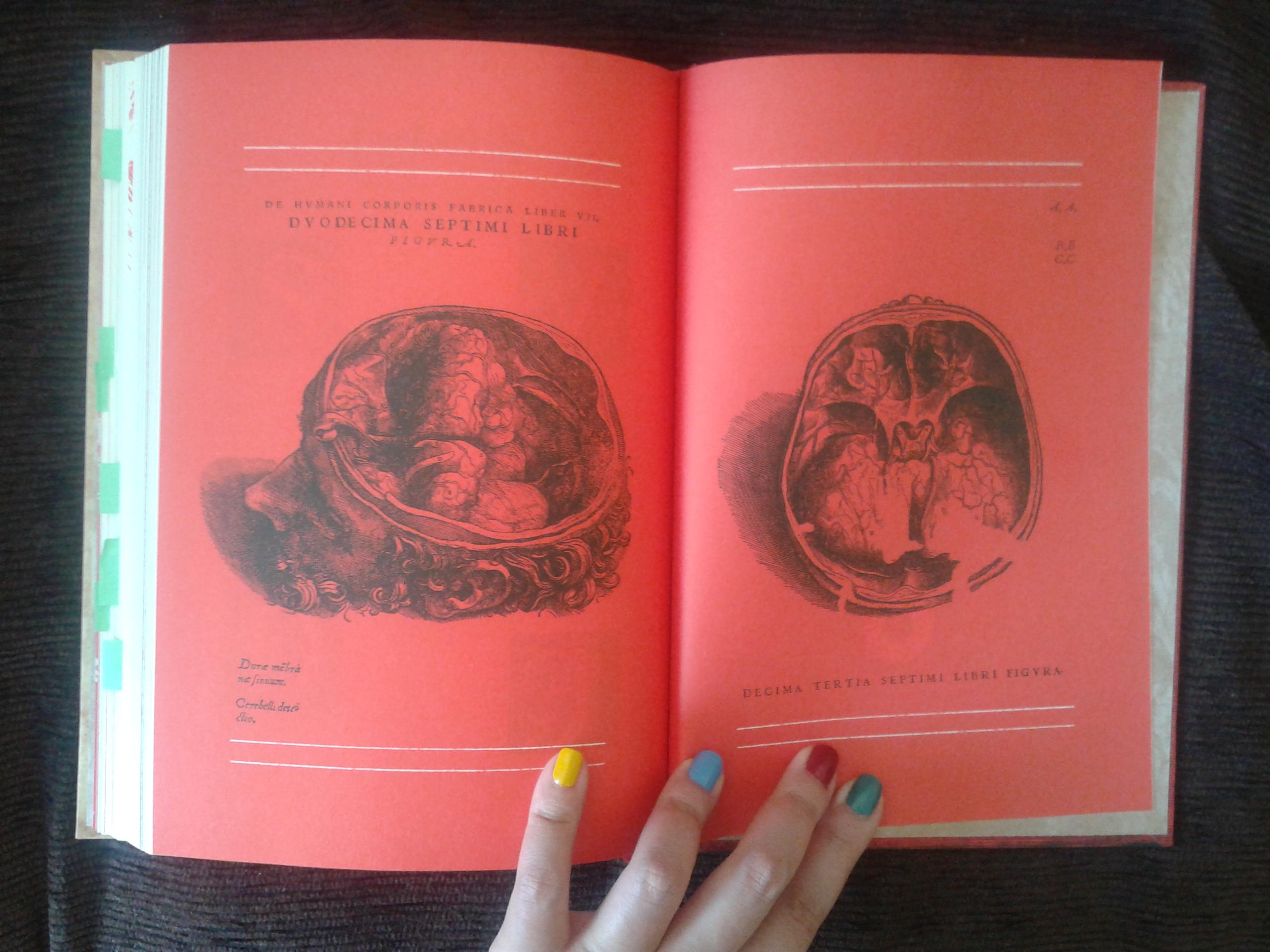 Frankenstein ou o Prometeu Moderno, Darkside Books