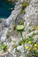 Amalfi Coast Photo Gallery 6