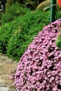 deserto - orto botanico Napoli 3