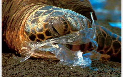 Why Reduce Your Use of Plastic?