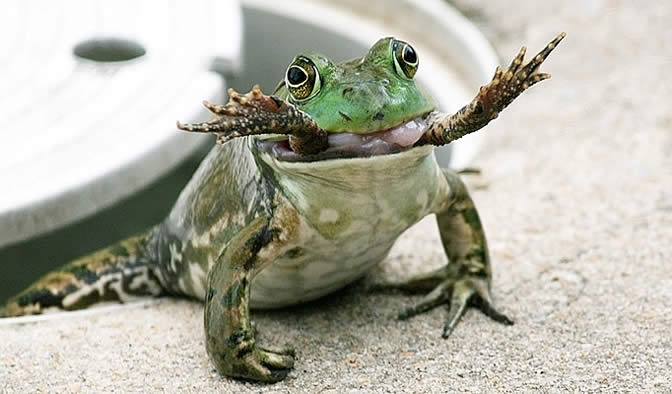 Image result for frogs swallow