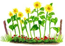"""Słoneczniki babci (Grandma's sunflowers)"" by Rebecca Górzyńska--Delphina Rose"