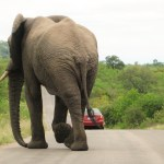 Elephant walks away